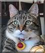 Kit-Kat the Tabby
