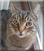 Hummel the Domestic Cat