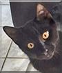 Blacky the Cat