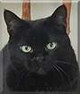 Katrina the Black Cat