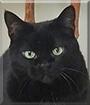 Katrina the Black Cat