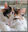 Nyla the Mixed Breed Cat