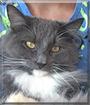 Cuno the Longhair Cat
