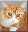 Otis the Orange Tabby