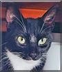 Happy the Tuxedo Cat