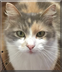 Menum the Calico Cat