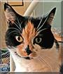 Bel Cat the Calico