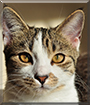 Shado the Tabby and White Cat