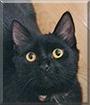 Cher the Medium-hair Domestic Cat