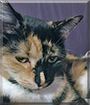 Rosie the Tortoiseshell Cat