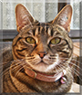 Sally the Tabby