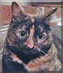 Prilla the Tortoiseshell Cat