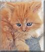 Tsun the Persian Cat