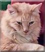 Dewey the Tabby Cat