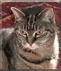 Elsie the Tabby Cat