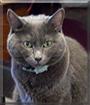 Effie Lou the Cat