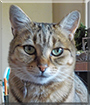 Mia the Tabby Cat