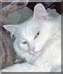 Louis the Longhair Cat