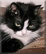 Baby Kitty the LongHaired Tuxedo