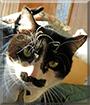 Ozzy the Tuxedo Cat