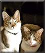 Philip, Bay Bay the Tabby Cats