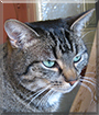 Cerise the Tabby Cat