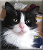 Daisy the Tuxedo Cat