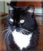 Bruno the Tuxedo Cat