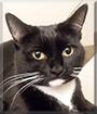 Mira the Tuxedo Cat