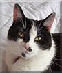 Smudge the Tuxedo Cat