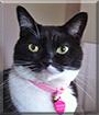 Painter the Tuxedo Cat