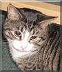 Ronny the Tabby Cat