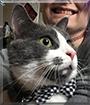 Clarke the Tuxedo Cat