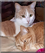 Victa & Milo the Domestic Shorthairs