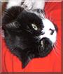 Asia the Tuxedo Cat