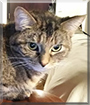 Harriet the Tabby, the Cat of the Day