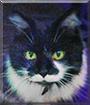 Oreo the Norwegian Forest Cat