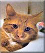 TT the Ginger Cat