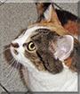Minka the German Housecat
