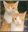 Sam, Cooper the Domestic Shorthairs
