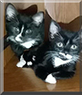 Boots, Shadow the Tuxedo Cats