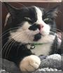 Kammy the Tuxedo Cat
