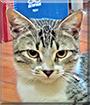 Pingo the Brazilian Cat mix