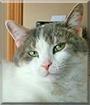 Calico (Winnie) the Calico Cat