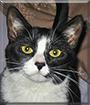 Lucy the Tuxedo Cat
