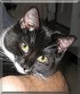 Thelma the Tuxedo Cat