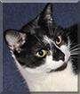 Splodge the Domestic Cat
