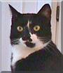 L.B. the Tuxedo Cat