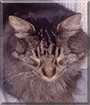 Puddin the Domestic Cat
