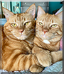 Cupcake, Buttercup the Ginger Tabbies